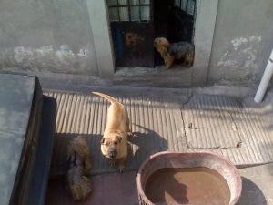 mexico city dogs pets